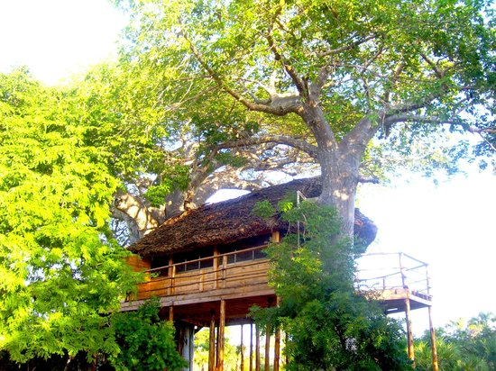 Bandari ya Amani Beach Lodge : Treehouse outside