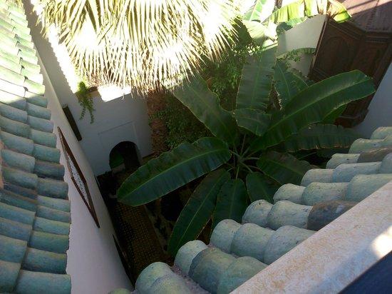 Riad Dar El Aila : Le palmier pour l'exotisme