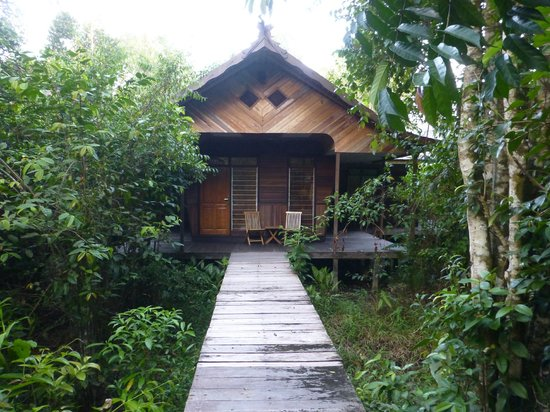 Rimba Orangutan Eco Lodge: Our cabin/room