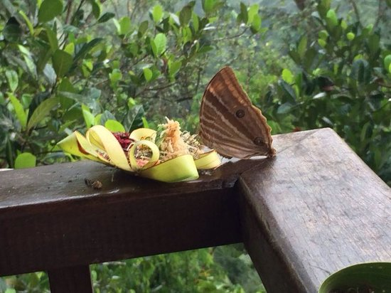 Natura Resort and Spa : Butterfly on Bali offering in resort