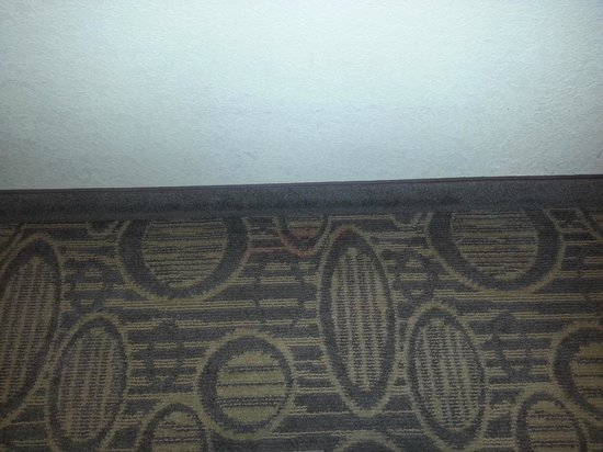 Comfort Suites Regency Park: Some red stains on the carpet, not really a big deal