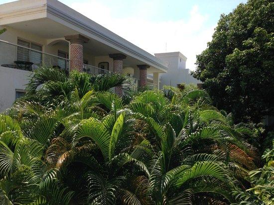 San Diego 974 Suites: Jardin frondoso espectacular.