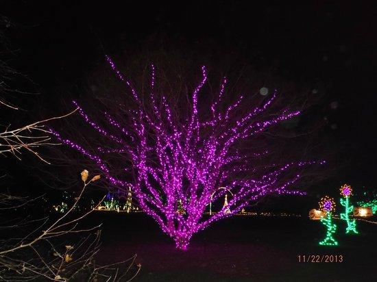 Norfolk Botanical Garden : Beautiful Tree