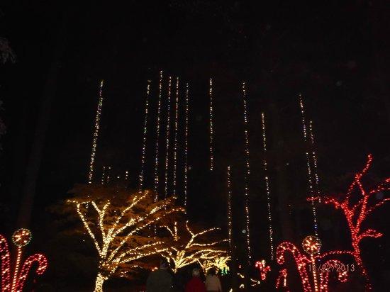 Norfolk Botanical Garden : Lights