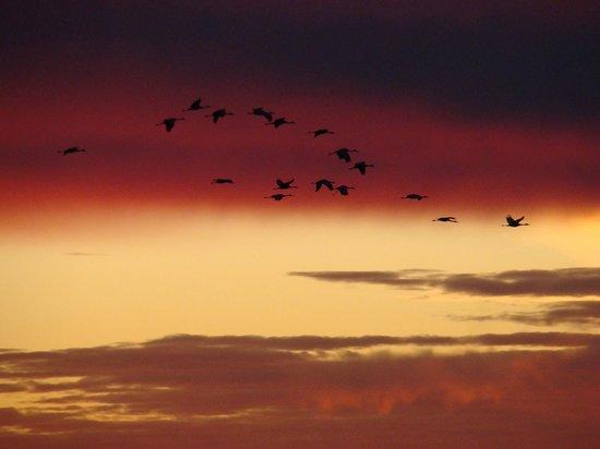 Jasper-Pulaski Fish and Wildlife Area: Beautiful backdrop to view the cranes