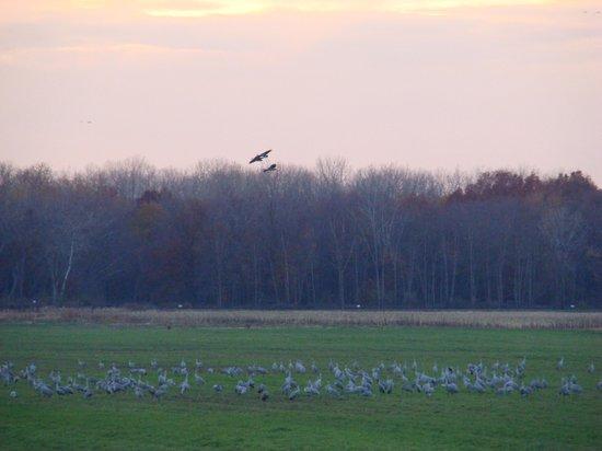 "Jasper-Pulaski Fish and Wildlife Area: The ""destination field"""