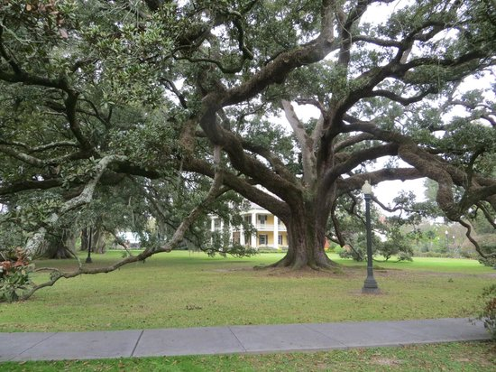Houmas House Plantation and Gardens: Beautiful 500+ year old live oaks