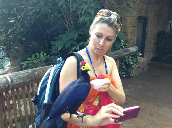 Discovery Cove: very interesting...
