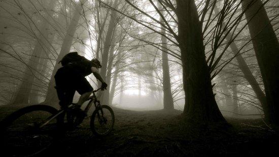Krank Cycles : Redwood Poli Poli