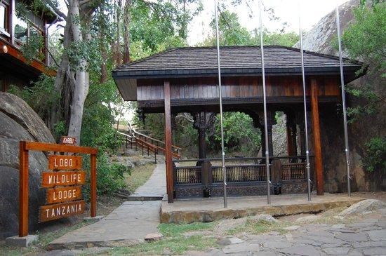 Lobo Wildlife Lodge: Lodo lodge