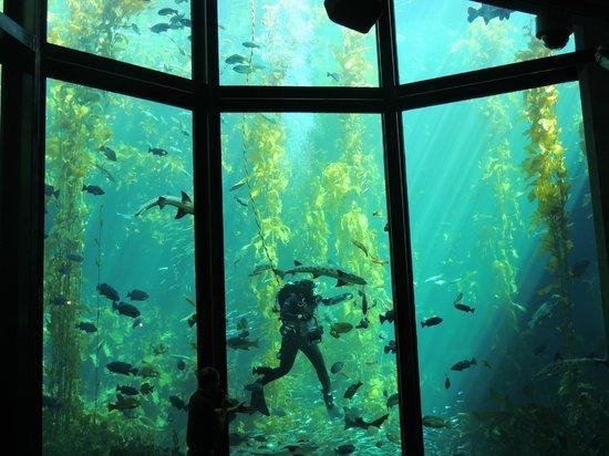 Monterey Bay Aquarium: кормление