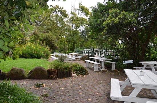 Sao Goncalo's Kitchen : Os jardins