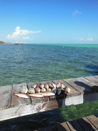 Matachica Resort & Spa: Reef fishing