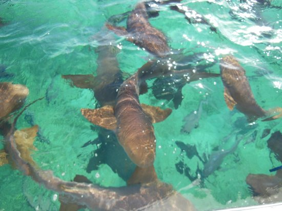 Matachica Resort & Spa: Hol Chan Shark Ray Alley