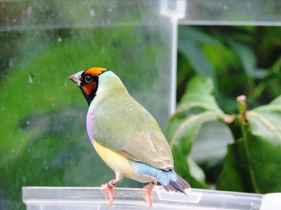 Butterfly World: Pleins de beaux oiseaux