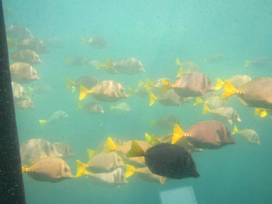 Cabo Submarine : Some of the many colorful fish