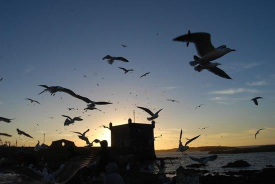 Dar Ness: port d'essaouira