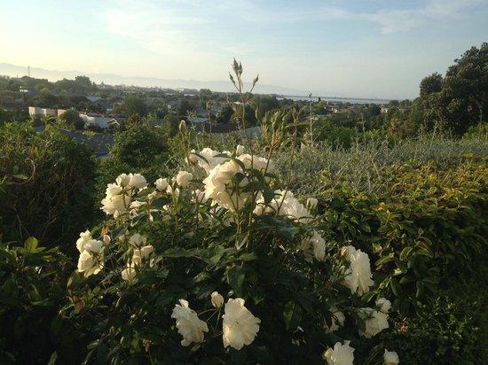 A Woodsy House: De tuin en het uitzicht