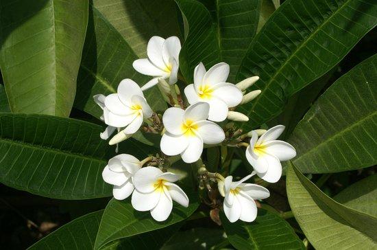 De nombreuses sortes de palmiers photo de kailua kona le d 39 hawa tripadvisor - Sortes de palmiers ...
