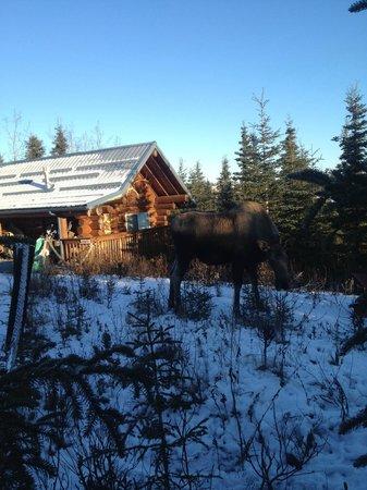 Caribou Crossing Cabins: Grumpy Winter Visitor
