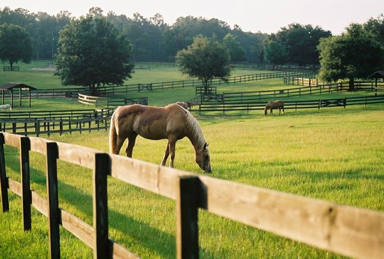 Alachua, FL: Horses in retirement!