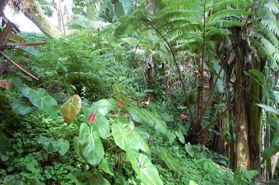Dolphin Bay: Your own personal rain forest - in the grounds