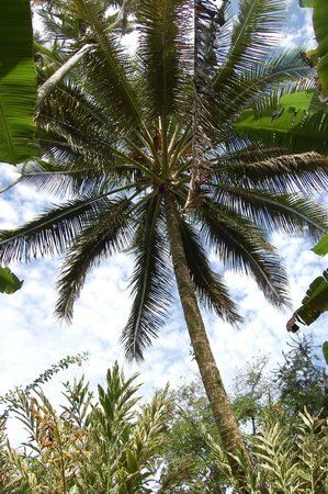 Dolphin Bay : Palm tree paradise - in the grounds
