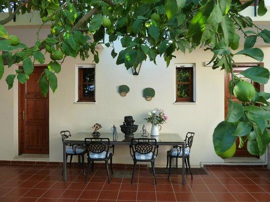 Atsipopoulo, Greece: THE LEMON TREE