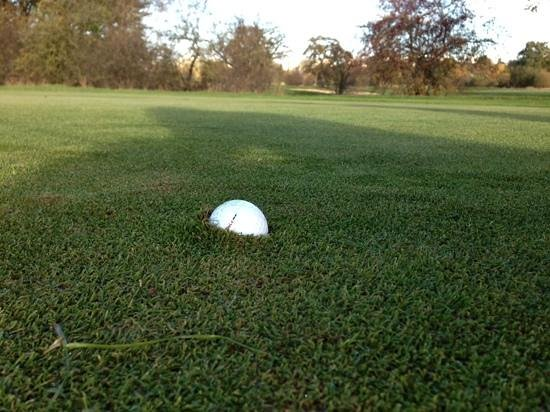 Richmond Park Golf Courses : The greens were quite holding!