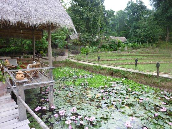 Kamu Lodge : entre jungle et rizières