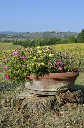 Agriturismo Fattoria Santa Vittoria: Great view!!!