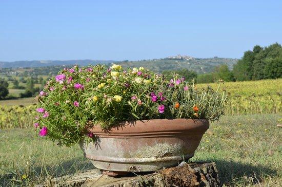 Agriturismo Fattoria Santa Vittoria: Beautiful view