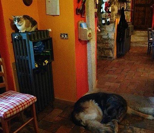 B&B Melizio: happy animals, happy home