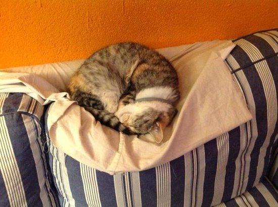 B&B Melizio: very happy cat