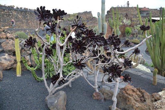Jardín de Cactus: Vue du jardin