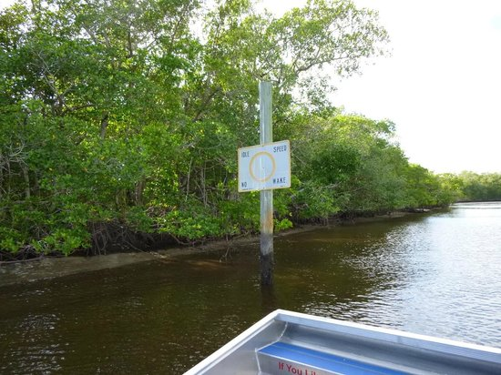 Everglades City Airboat Tours: Entering The Jungle