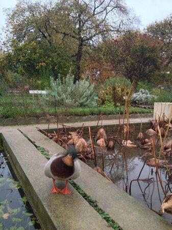 Des plantes picture of jardin des plantes paris - Zoo jardin des plantes ...