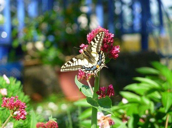 Artigouha : joli papillon