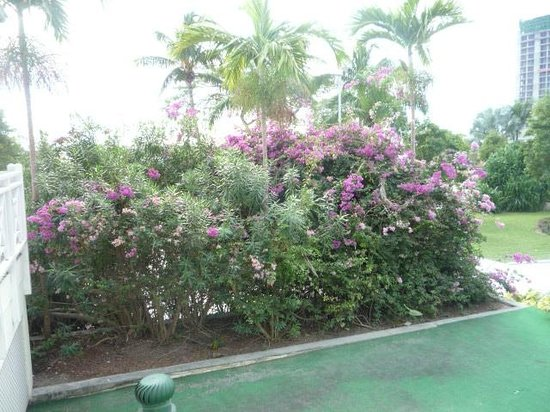 Breezes Resort & Spa Bahamas: Flowers
