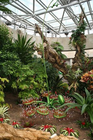 San Antonio Botanical Garden: The carnivorous plant display
