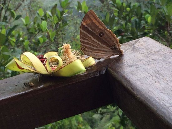 Natura Resort and Spa : Butterfly on Bali offering