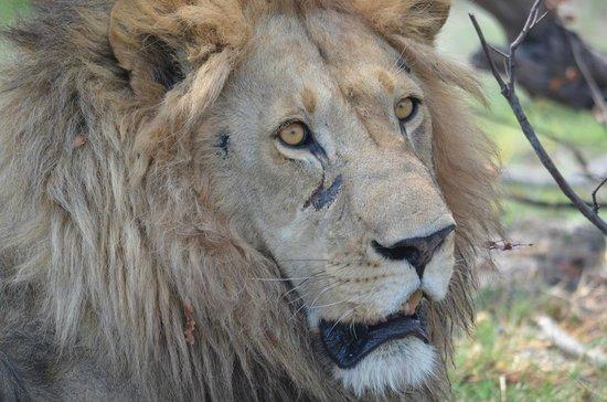 andBeyond Nxabega Okavango Tented Camp : Game Drive Sighting