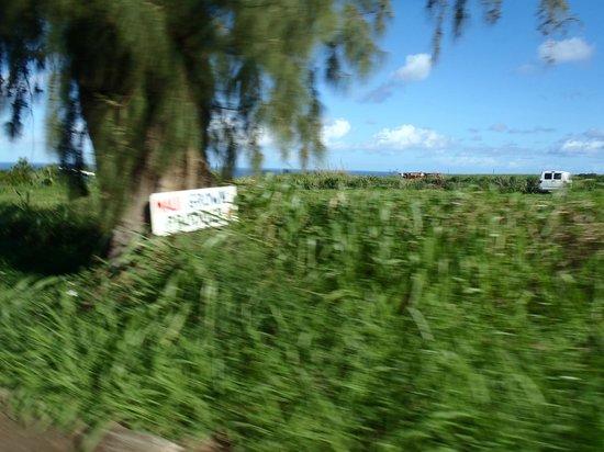 Maui Sunriders: trip down