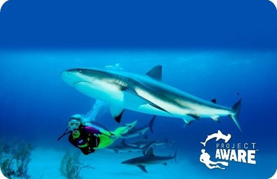 Eco Dive: As part of PADI's 100% AWARE program we donate $10 on behalf of every student to projects