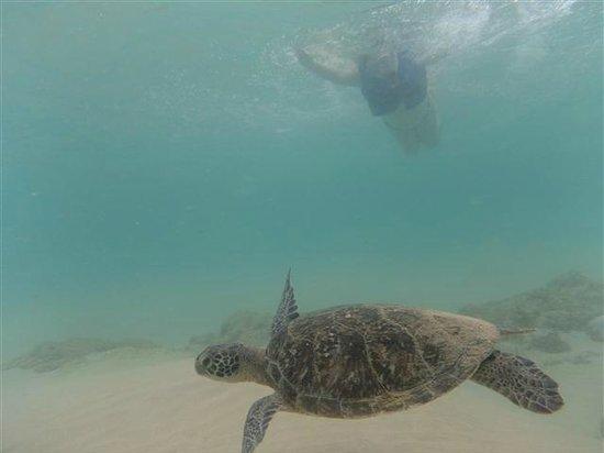 Baia do Sancho: Sancho é... Nadar com tartaruga marinha.