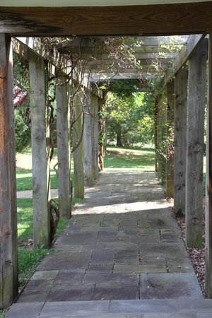 White Hall Vineyards: Covered trellis walkway into front of winery