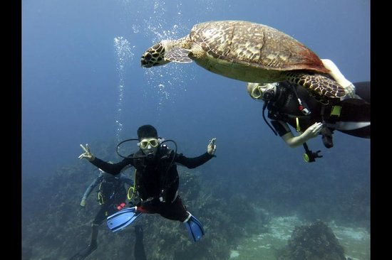 West End Divers: Swimming with turtles!!