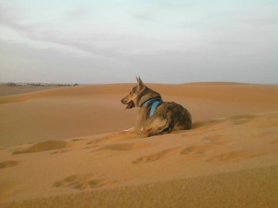 Palmeras Y Dunas : en dunas