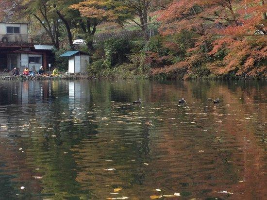 Lake Kamakita: 水鳥も冬支度の合間にすいすいと