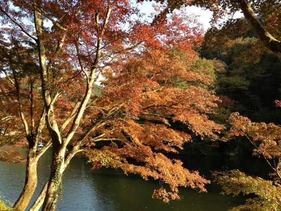 Lake Kamakita: 紅葉の彩り